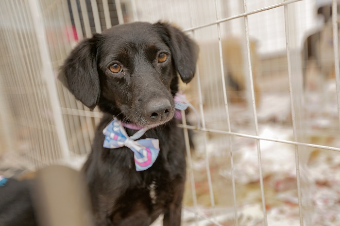 Itapevi promove 9ª edição da Feira de Adoção de Cães e Gatos Me Leva Pra Casa