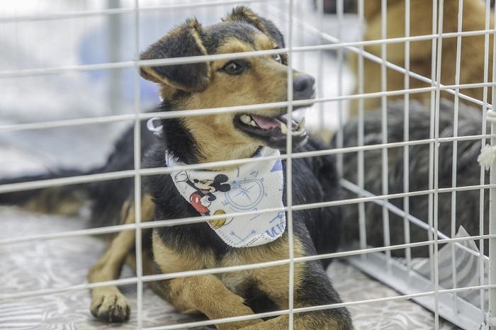 Itapevi realiza 23ª edição da Feira de Adoção de Cães e Gatos