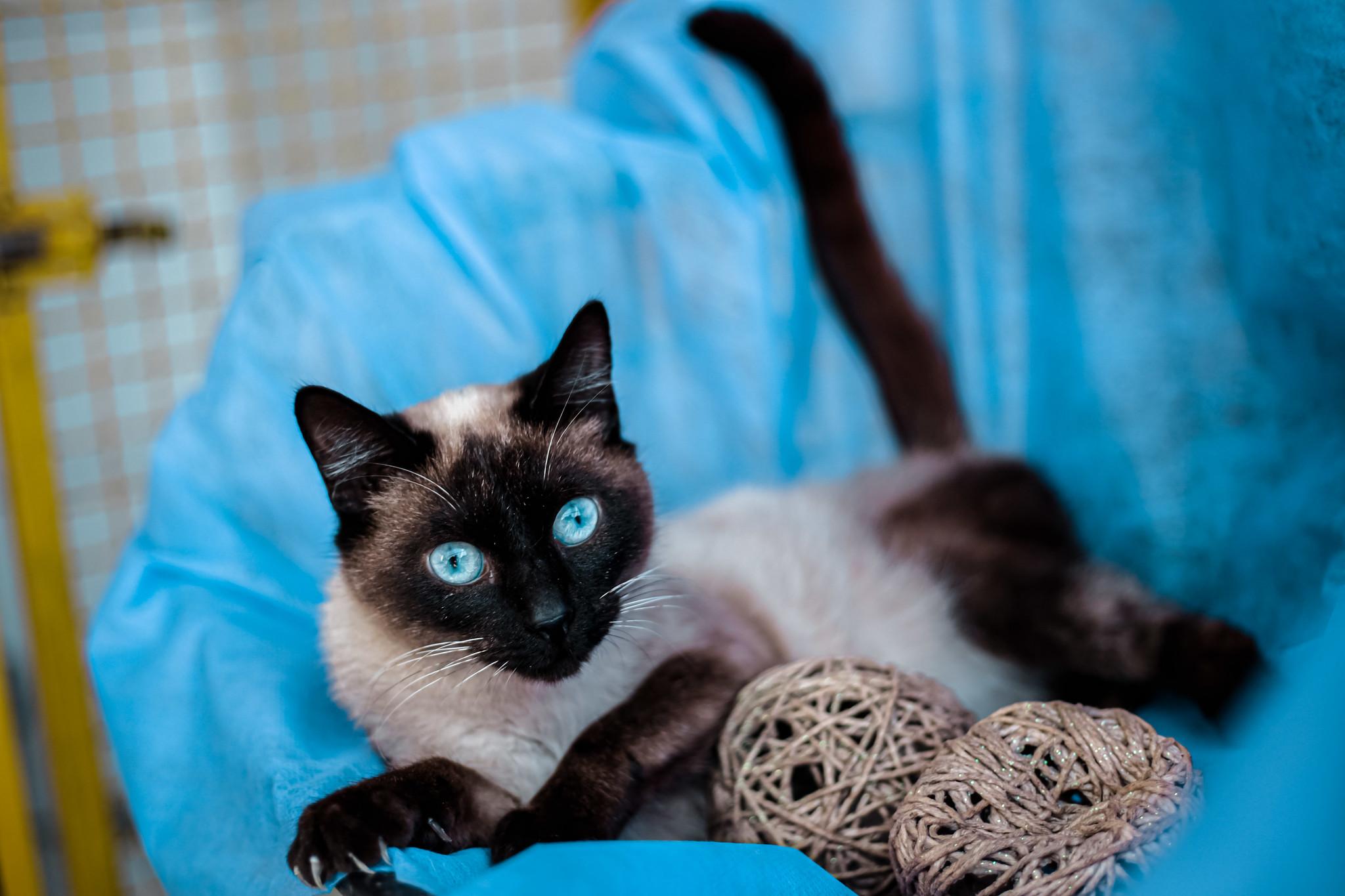 Prefeitura de Itapevi lança site pra adoção de pets